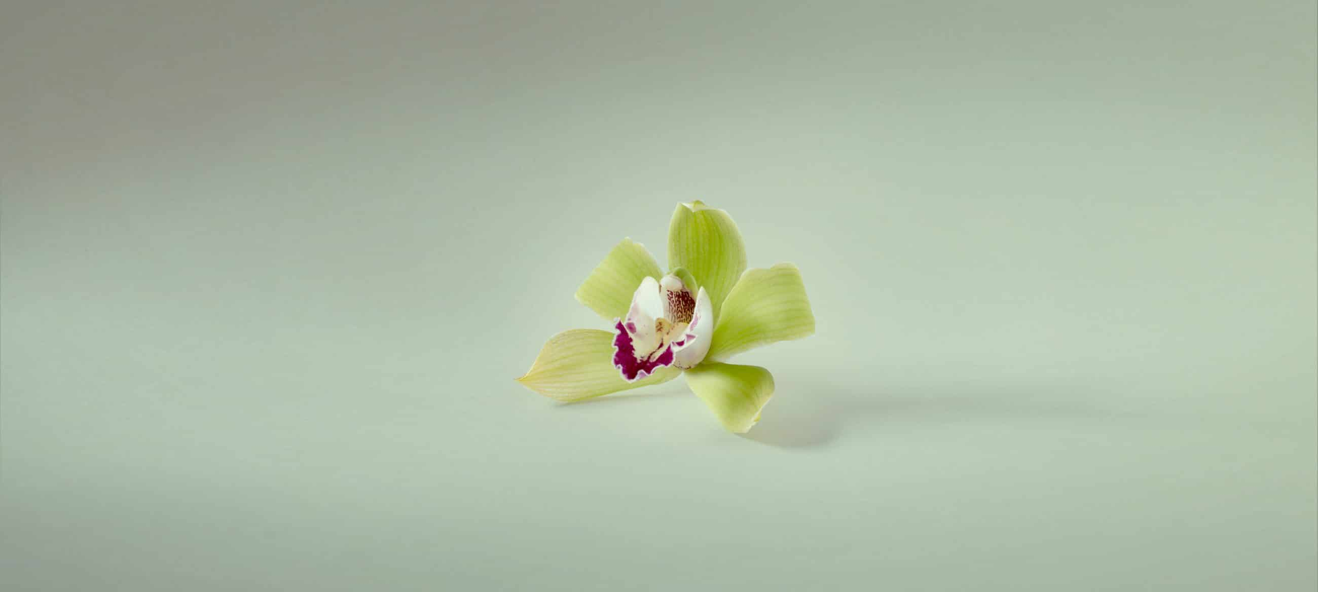 pey_flower