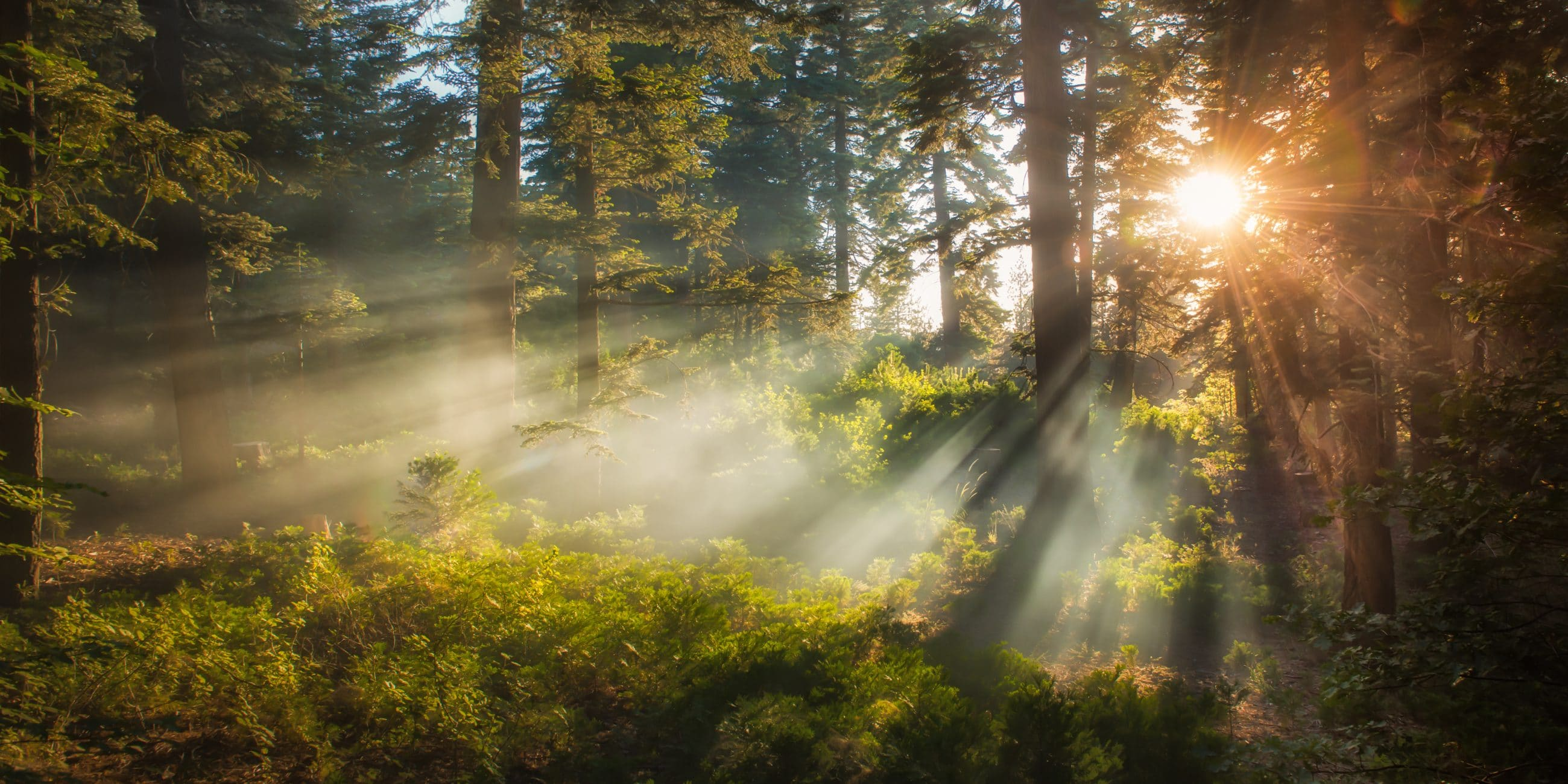 Sunlight streaming through trees, San Bernardino National Forest, California, USA